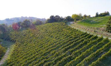 Barbaterre, un nuovo futuro a Canossa: «La nostra missione è il Pinot Nero»
