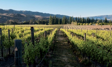 I vini di Cloudy Bay: la Nuova Zelanda non è solo rugby
