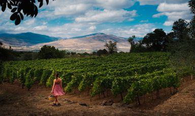 L'Etna dei vini: un incredibile mosaico naturale