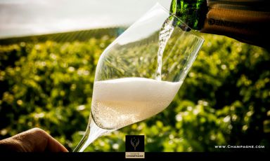 A glass ofChampagnein the vineyard: our virtual journey begins