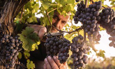 Alla scoperta dei vini del Montello