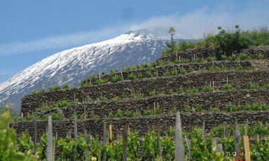 Tutto quello che avreste voluto sapere sui vini dell'Etna