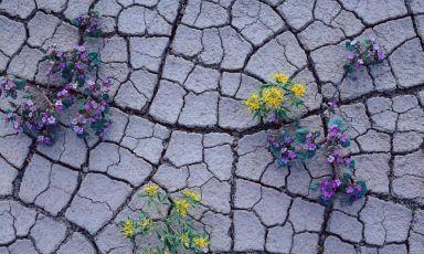 I fiori nel fango