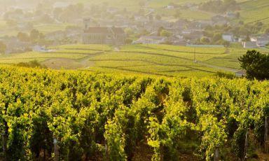 Sfumature di Borgogna