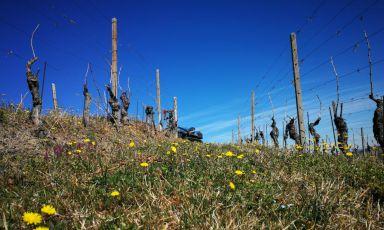Ru Nizza: un vino dalle radici profonde come la quercia