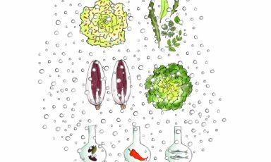 Le insalate della serra di Piazza Duomo cotte sottovuoto e impreziosite con peperoni, acciughe, olive. Il piatto è di Enrico Crippa e qui è illustrato da Gianluca Biscalchin