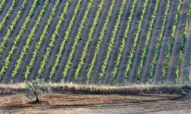 Il meglio del Montepulciano d'Abruzzo