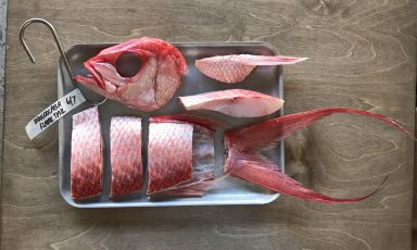 Il metodo di frollatura del pesce spiegato da Luigi Pomata