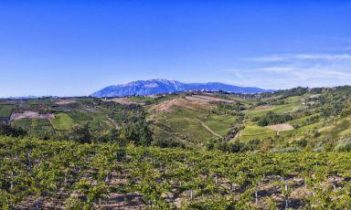 Cantina Orsogna, un patrimonio di mille ettari bio. Da valorizzare