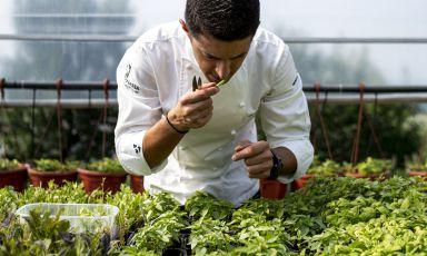 Mammoliti no-limits: la continua ascesa dello chef con un'anima sempre più green