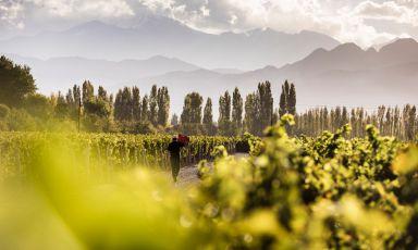 Terrazas de los Andes: fortissimamente Malbec