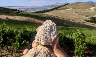 Serra Ferdinandea, un sogno in Sicilia. Planeta e i francesi Oddo Vins&Domains insieme in un nuovo progetto