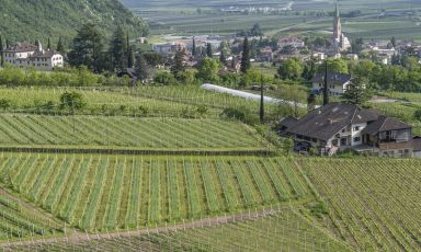 I vigneti delle Cantine Terlano e Andriano distano solo 4 chilometri, ma i vini sono estremamente diversi