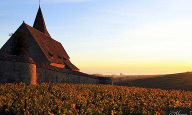 IlMillésimes Alsace Digitasting®è stato una bella vetrina internazionale per i vini d'Alsazia
