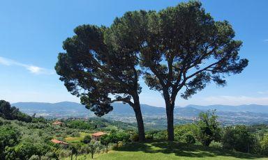 La varietà di Terenzuola: Ivan Giuliani produce ottimi vini in molti territori diversi
