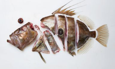 A photo from The Whole Fish Cookbook, the book fr