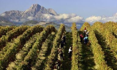 Vini d'Abruzzo: «Basta restare nel buio, ma serve più d'orgoglio»