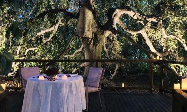 Mollica e una fiabesca cena nel bosco