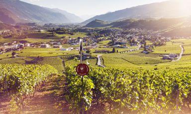 Sole, aria tersa, un paesaggio da favola: un vigne
