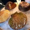 Si compone di due (per due) pezzi: queen clam e mahogany clam