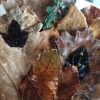 Comprime in un solo piatto 4 snack che forse qualche anno fa avrebbe servito separatamente. Una soluzione divertente e gustosa.Nel dettaglio:  Ore 6: Peracompressa nell'uva spina rossa fermentata con olivello spinoso maturo, un insieme piuttosto acerbo reso piùdolce da un piso (sempre miso con piselli secchi) condito con semi di coriandolo (che gli recapita SorenWiuff, storico fornitoredi Redzepi). La foglia esterna piùsottile èuna pelle ottenutadabrodo di pollo e foglie di faggio sotto aceto.  Ore 10:Sandwich di ribes nero croccante fatto a foglia, condito con yogurt,kombucha,fiori di sambuco e oxalis rossa  Ore 12:Ramo di malto con foglie di nasturzio, creme fraiche, sale di pino e formiche  Ore 4:Foglia di aglio nero con un sale di kelp, alga giapponese