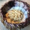 Ricci di mare pressati con panna fresca e semi di zucca