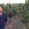 Il viticoltorePietro Lilliutra le vigne della sua azienda in Marmilla