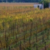 "Villa Job's vineyards in Pozzuolo del Friuli (Ud), +39.0432.562555. A young Tuscan man, commuting between Milan the North-East, Alessandro Job (pronounced ""iob"") founded this winery 5 years ago, giving it almost immediately an organic focus"