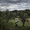 Gianluca Gorini, all'epoca sous chef di Lopriore al Canto, nell'esercizio di foraging nella campagna di Siena.Da qualche mese è lo chef de Le Giare di Montiano (Forlì-Cesena)(foto PAJ/Phaidon)