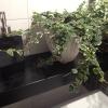 Prima del dessert, toilette: il vegetale vince anche in bagno