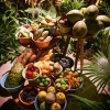 I prodotti locali serviti al Noma Mexico