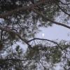 Tre ore dopo sale la luna nel cielo di Andria, venerdì 2 dicembre 2011