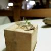 Miniature Wild 2: Zigher aromatizzato al lichene e aceto di pino. «Lo Zigher è un formaggio delle Dolomiti. Lo faccio fare da un casaro e poi lo affino con il lichene di pino»