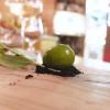 La nostra cena al Cum Quibus di San Gimignano, negli scatti di Tanio Liotta. S'inizia con una Finta oliva verde, aglio olio e peperoncino, crumble di oliva
