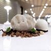 Terra di Langa: finto tartufo di cioccolato bianco, bigné di topinambur, crema e crumble di nocciola, gelato di porcini, tartufo bianco d'Alba