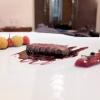 Filetto di daino, salsa savòr, rabarbaro e pomodorini marinati. Grandissimo piatto