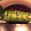 Il Cetriolo di IDES marinato in olio, menta e rosmarino su panna acida e semi di papavero, fieno greco e finger lime