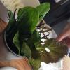 Assaggio #3: Foglie dell'orto (nel nostro caso mostarda, mizuna, tarassaco, rucola...) da intingere in un piattino dicrema artigianale di Cuneo