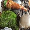 """Assaggio #7: """"Lumache"""" di cavolo rapa ripene di crema di prezzemolo e cipresso"""