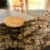 Toast di pane alla crema di ricotta forte e garum di sgombro