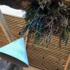 Alghe pendenti dal soffitto