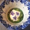 Zuppa di cetrioli freschi congelatina di panna acida