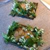 Snack interlocutorio diguancia di merluzzo su un velo sottile di alga con fiori di wasabi islandese, condito con una pasta di finferli preservati ed erbe