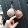 Teste di polpo seccatesotto sale (con palloncino dentro)