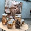 Dietro all'ingresso, contenitori di creature degli abissi in formaldeide, sul modello delle opere diDamien Hirst. La prima immagine una volta entrati vorrebbe riprodurre il presepe del villaggio scandinavo