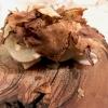 Il tartufo dei poveri... ma anche no! Ossia topinambur marinati, topinambur, anguilla e latticello. Pefetto punto di equilibrio tra i componenti, c'è texture e armonia, ma anche golosità; un piatto che vale il viaggio