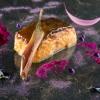 Merluzzo nero & verdure vola, una succulenza del2009: cavolo fermentato, salsa di patate viola, melanzana nera e violette. Nel menu contamporaneo, notevolissimoilSan Pietro arrostito alle olive e zenzero, zucca e galletti
