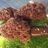 Spettacolo: muschio cotto nel cioccolato e ciocco-porcino.