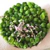 Crisp of wild plum and peas, tanto per ribadire bellezza e bontà