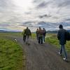 Camminare la campagna nell'Oregon. Da sinistra verso destra si riconoscono Carol e Anthony Boutard, Sarah Minnick, Paolo Marchi, Salvatore Vigliotta e Franco Pepe. Foto di Luciano Furia